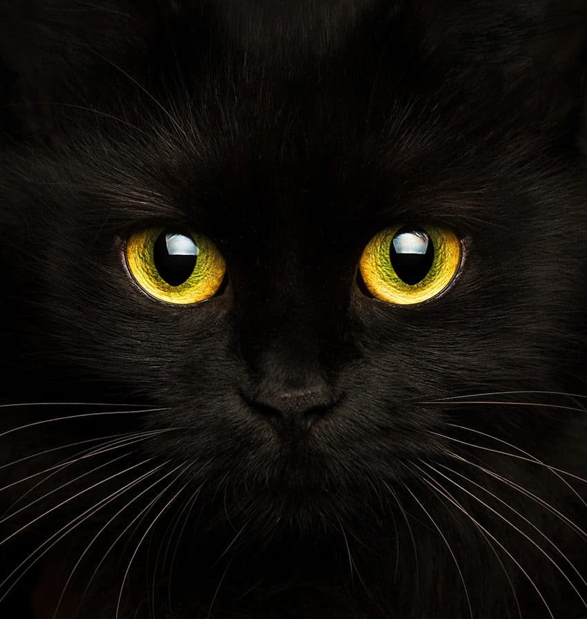 The curious tale of the cat in the night