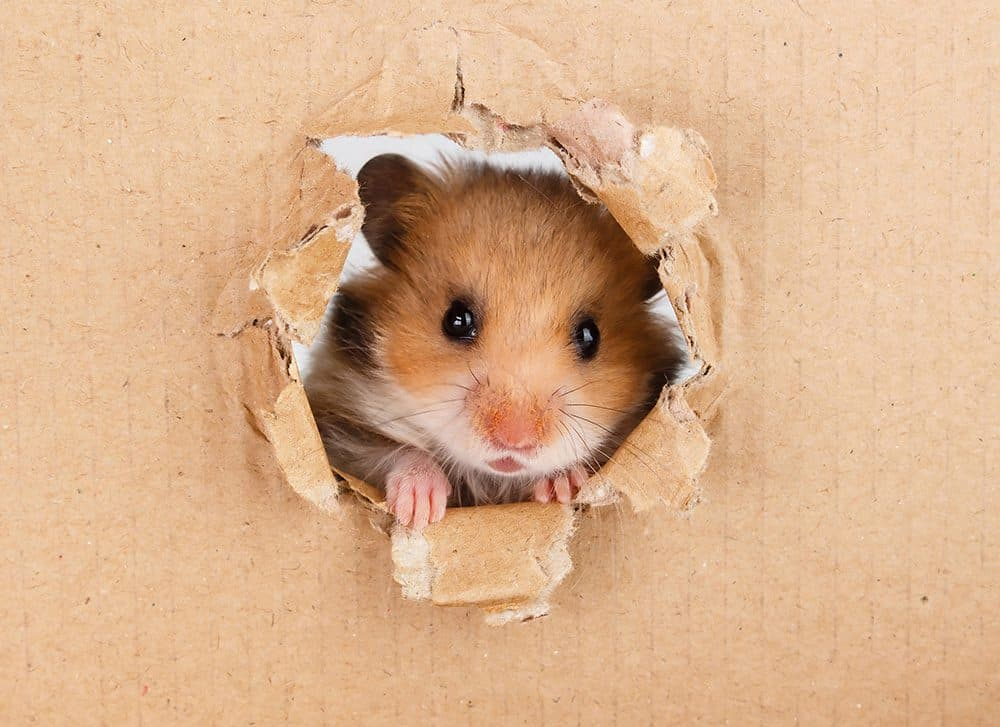 Create an ideal home for your hamster
