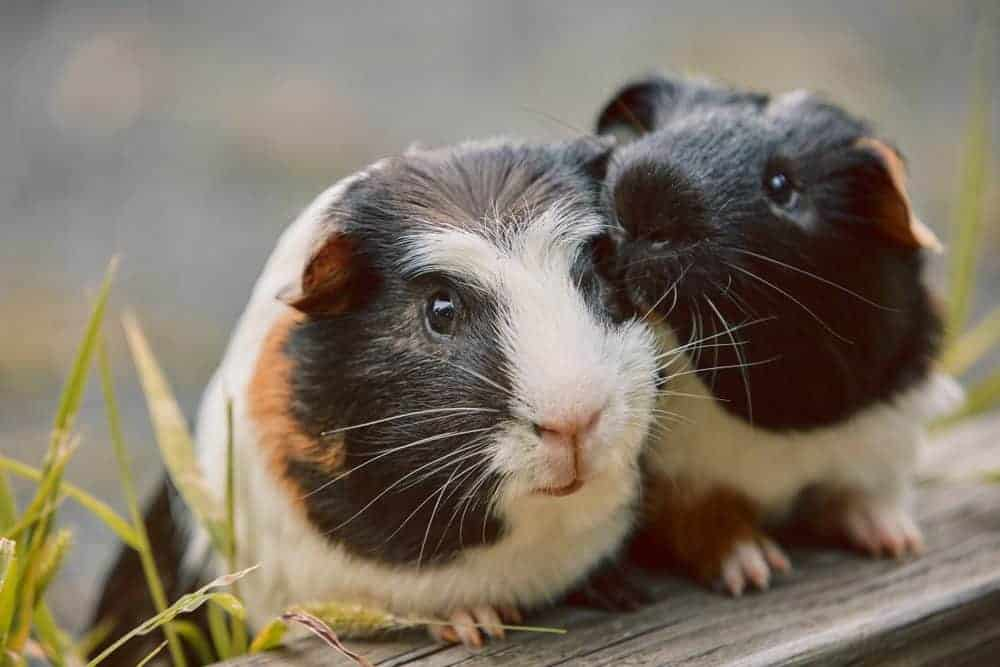 Which small pet is right for you?