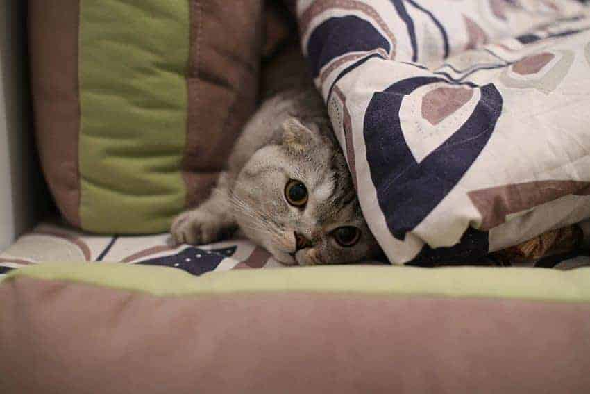 How cat friendly is your home?