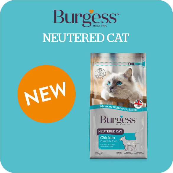 burgess-neutered-cat