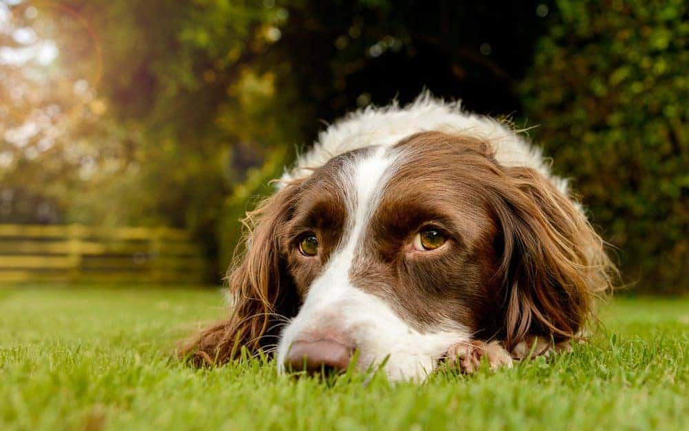 Create a garden that benefits your dog