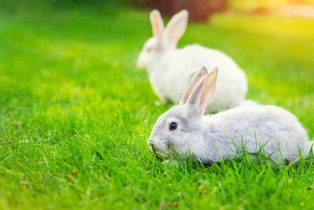 How to rabbit-proof your garden