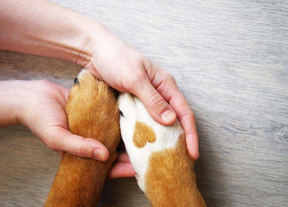 Help for animal heroes