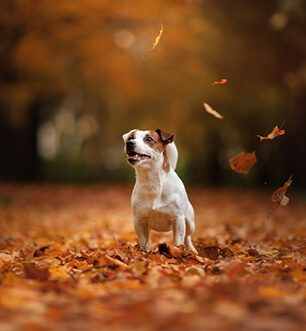 Dog in Autumn scenery