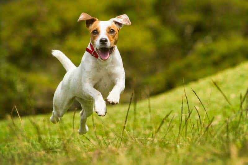 buying your dog food online