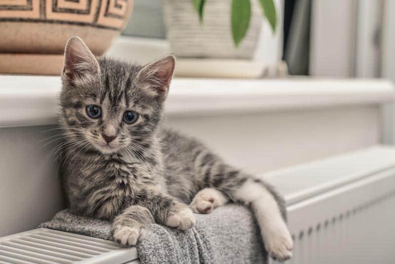 Kitten lying on the radiator