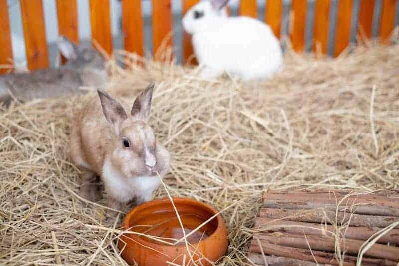 Rabbits sitting on hay