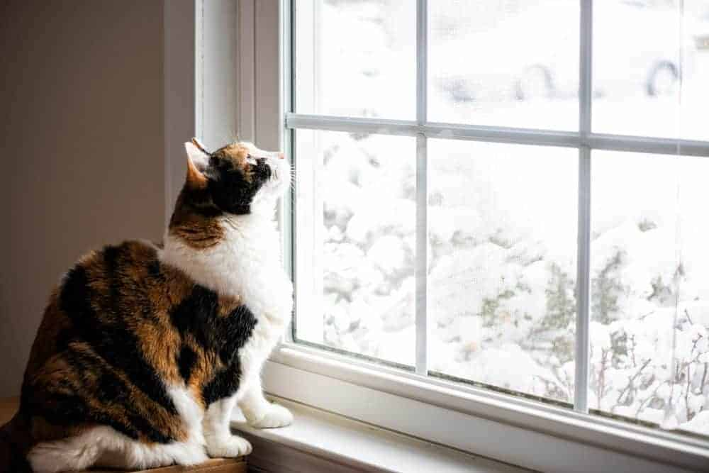 Cats and cold weather – why winter can be a risky time of year for felines